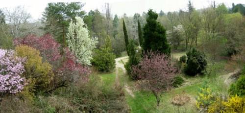 Printemps arboretum.jpg