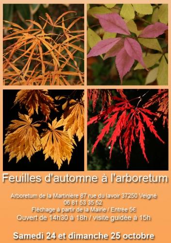 feuilles-d'automne-web.jpg