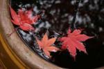 fin-automne.jpg
