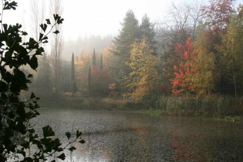 arboretum-ginkgo.jpg